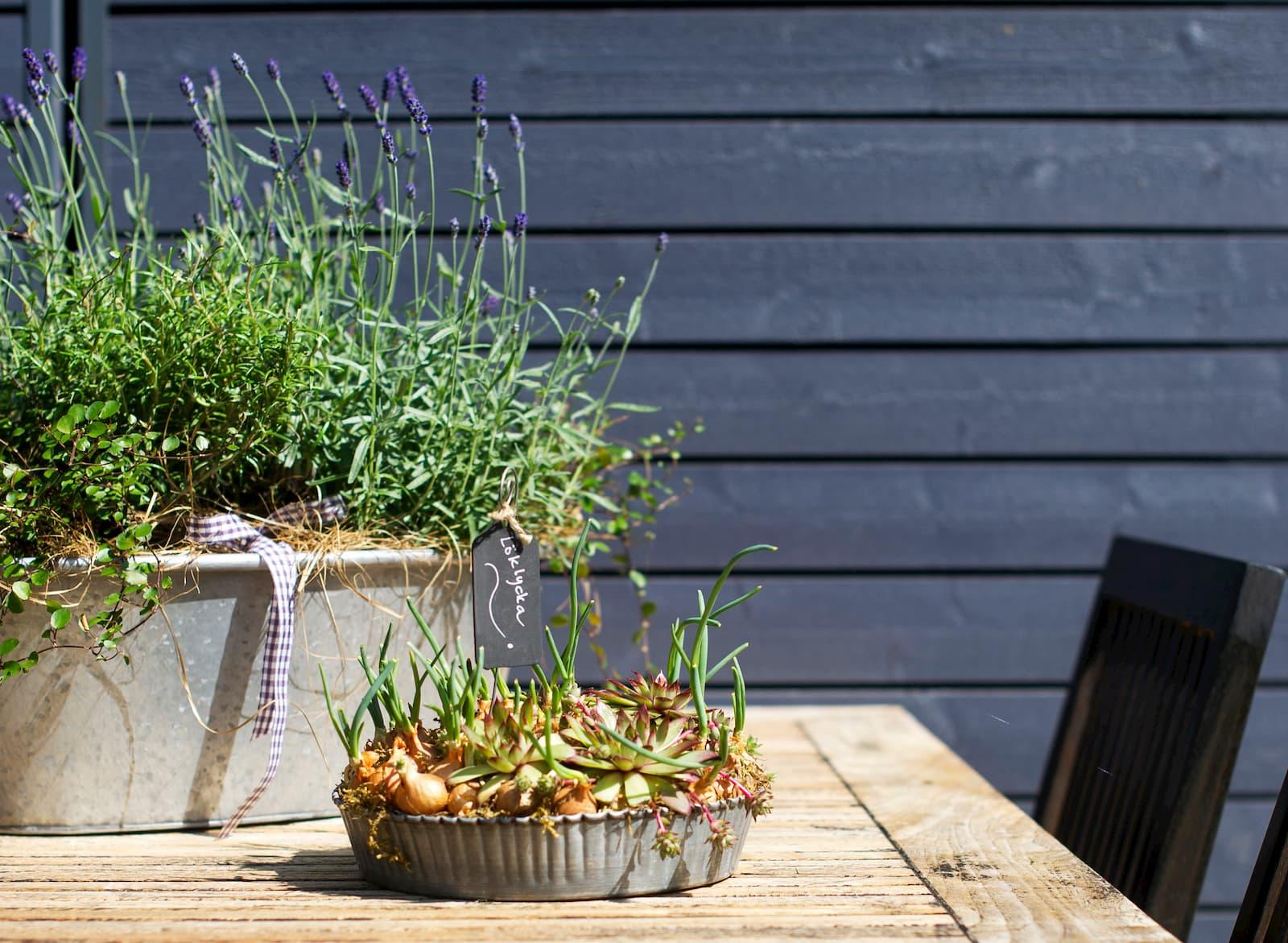 kuvassa pöytä ulkona kesällä