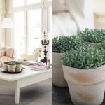 kuvassa rauhala-talon olohuone ja viherkasveja