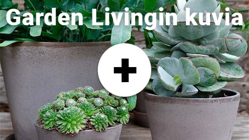 gargen-living-kuvia-thumbnail